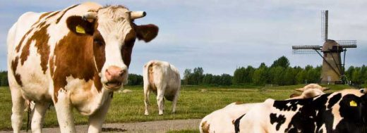 John Oliver Stupid Cows